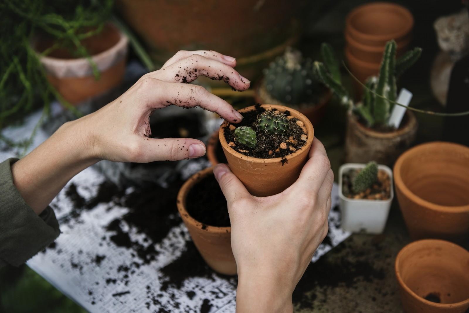 Grad Dubrovnik podržao akciju Dani kolektivne sadnje drveća - zasadi drvo ne budi panj
