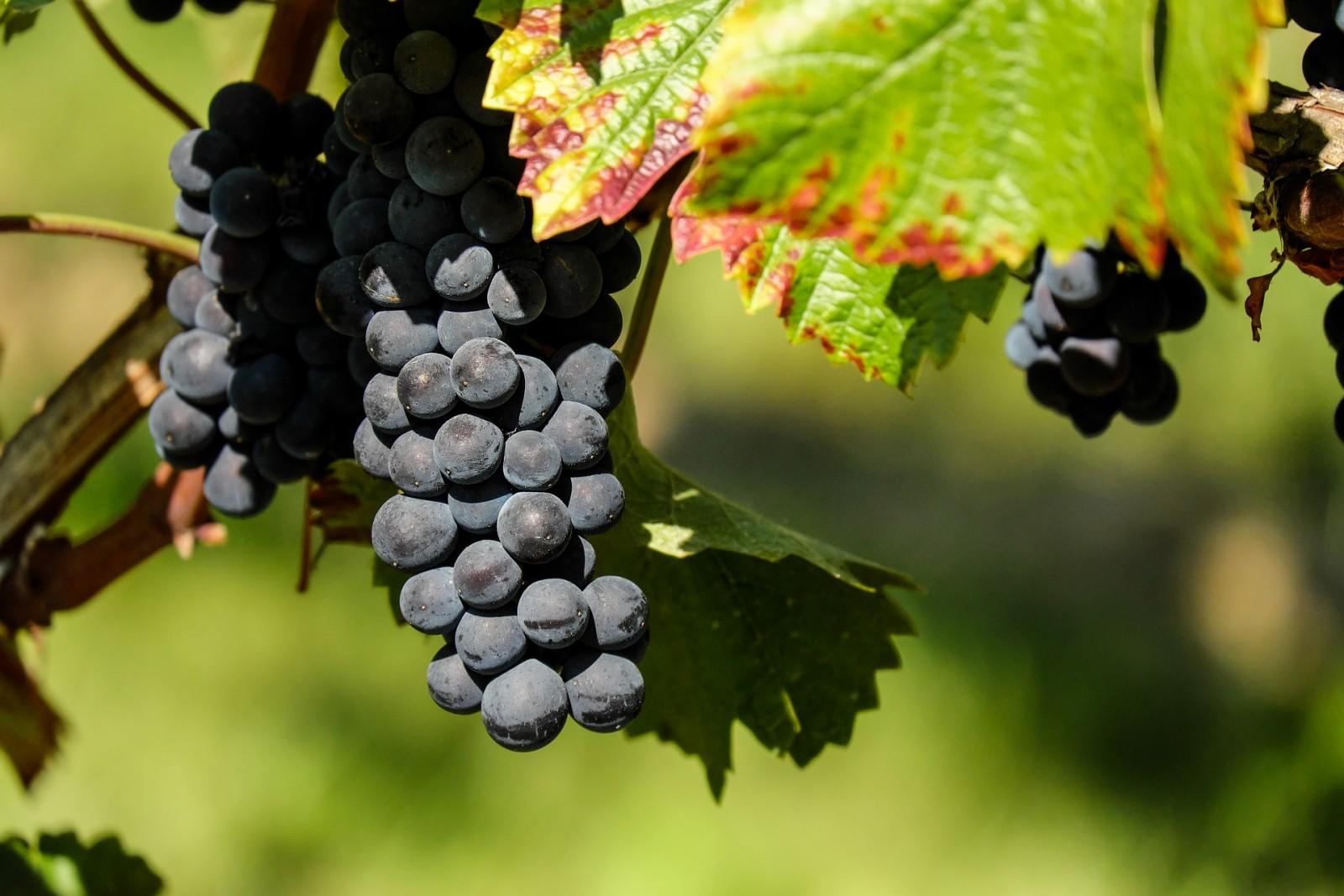 POZIV NA JAVNI UVID u prijedlog Programa raspolaganja poljoprivrednim zemljištem u vlasništvu Republike  Hrvatske za grad Dubrovnik